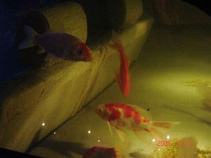 Car Aquarium (9 pics)