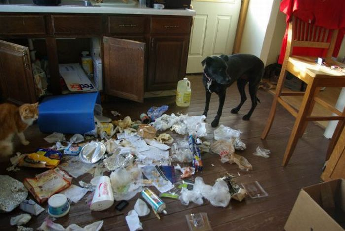 Animals. Home Alone (33 pics)