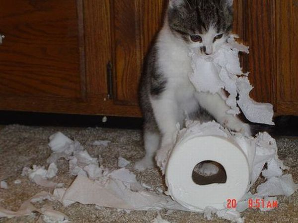 Animals. Home Alone (33 pics)