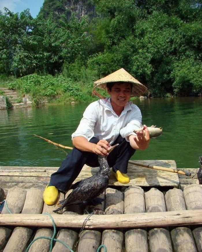 Bird Fishing (10 pics)