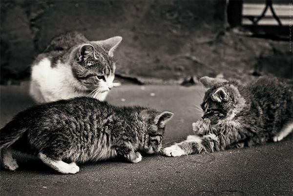 Cute Cats (53 pics)