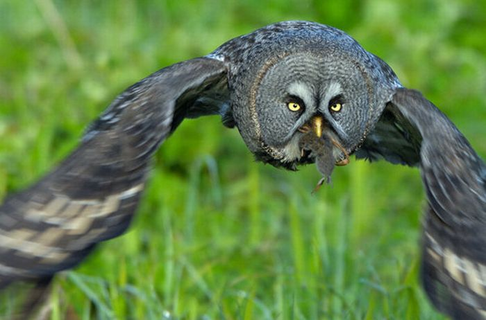 Incredible Photos of Animals (72 pics)