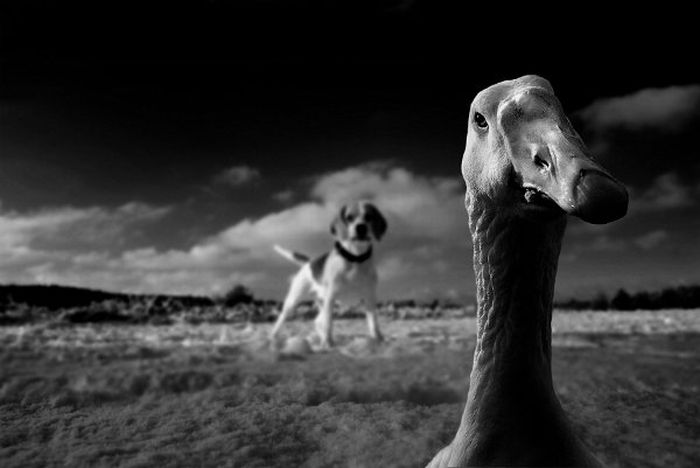 Incredible Photos of Animals (72 pics)