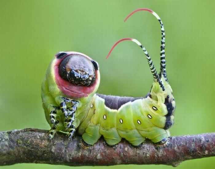 Unusual Crawlers (33 pics)