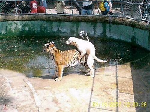 Animals Humping Wrong Animal (24 pics)