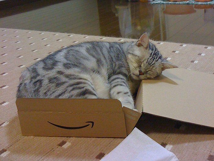 Сomfortable Ways of Sleeping in a Box (25 pics)