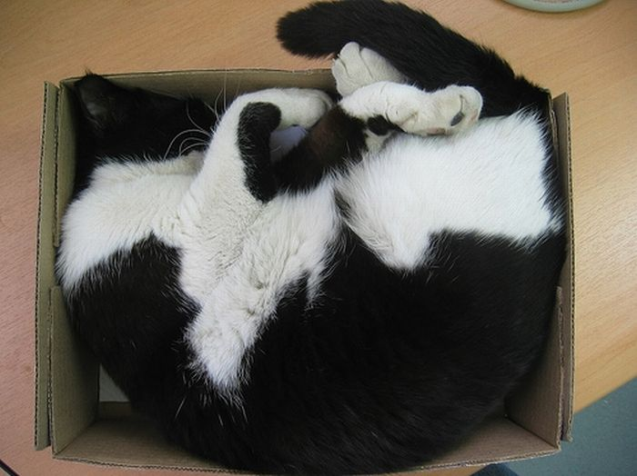 Сomfortable Ways of Sleeping in a Box (25 pics)
