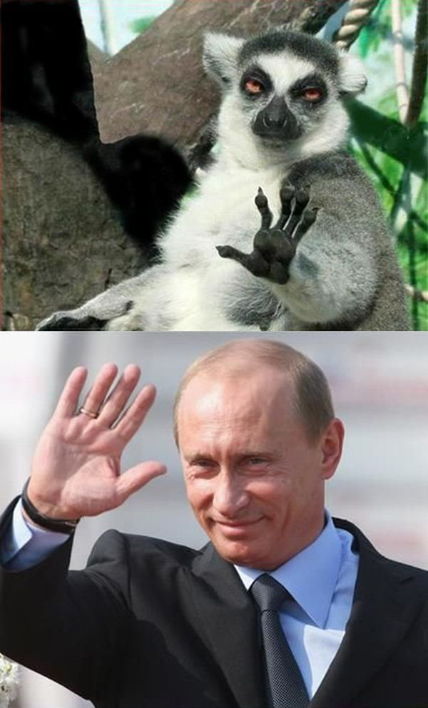 Saying Hi to Putin (20 pics)