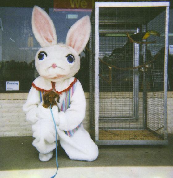 Funny Bunnies (69 pics)