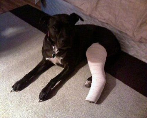 Animals With Casts (54 pics)