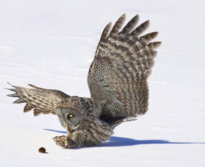 Funny Owl (3 pics)