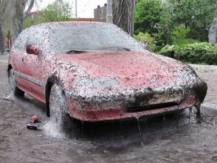 The Worst Thing That Can Happen to Your Car (5 pics)