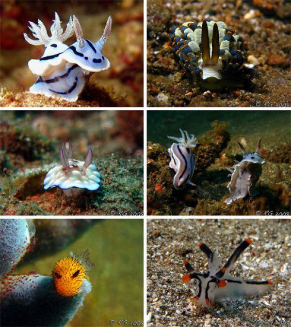 Beautiful Slugs (31 pics)