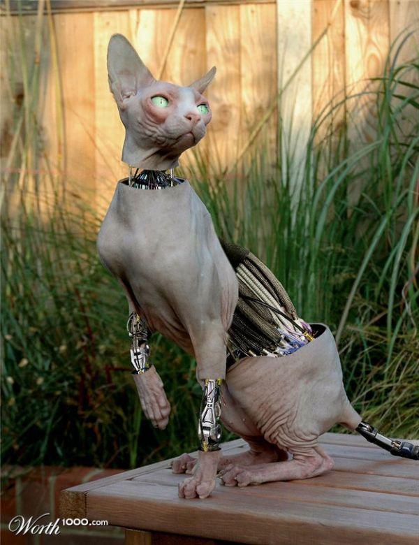 Cyborg Animals from Photoshop Contest (16 pics)