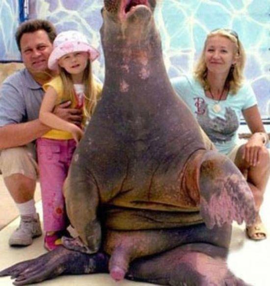 Funny and Strange Family Photos (28 pics)
