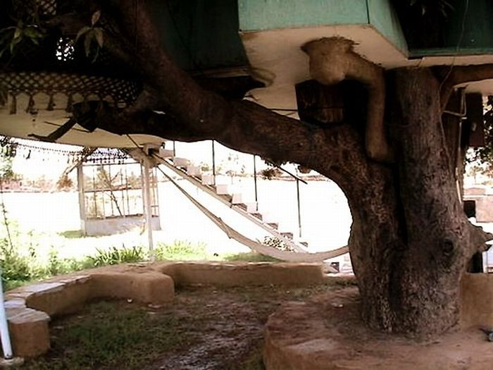 House on a Mango Tree (11 pics)