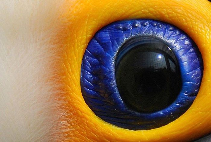 Animal Eyes (12 pics)