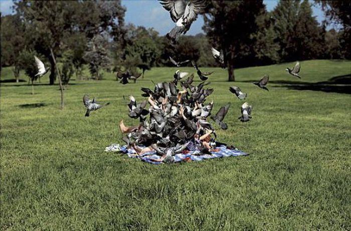 When Birds Attack (47 pics)