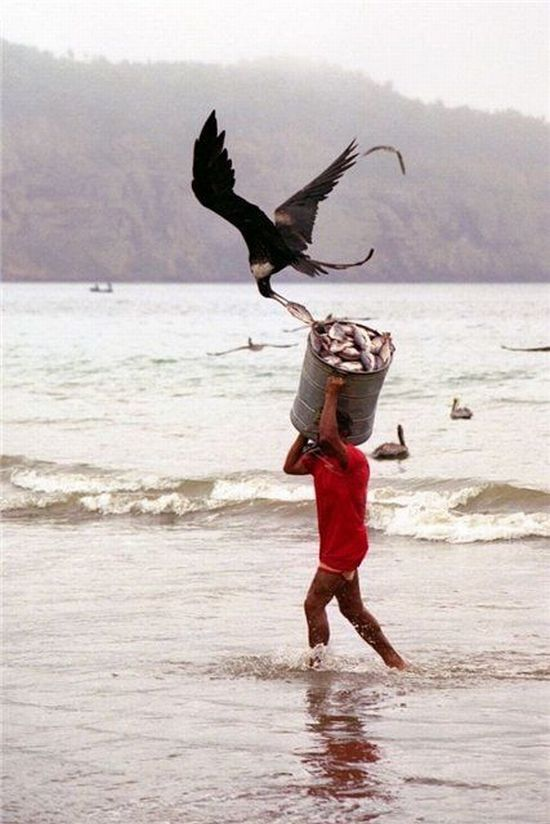 When Birds Attack (47 pics)