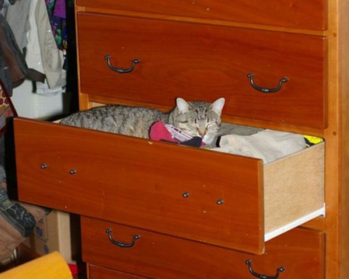 How to Store and Organize Cats (100 pics)