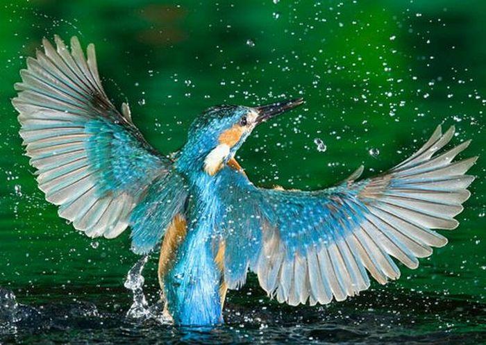 "Search Results for ""Deepika Padukone In Kingfishers"" – Calendar ..."