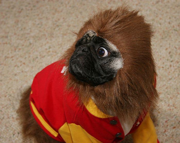 Cute Monkey (4 pics)