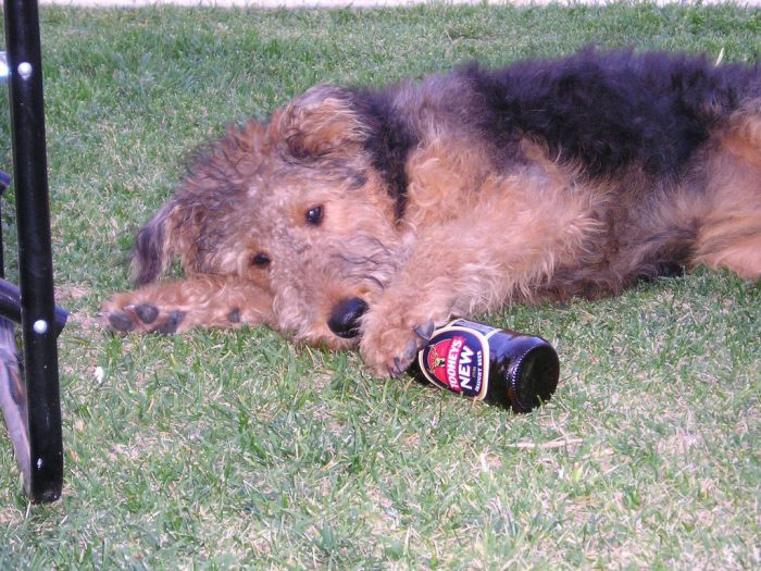 Dogs with Beer (20 pics)