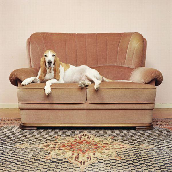 Dog's Life (33 pics)
