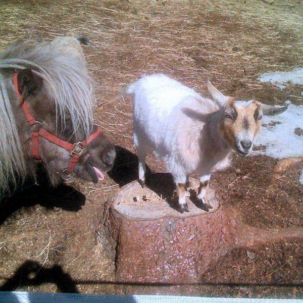 Horse Photobombs (23 pics)
