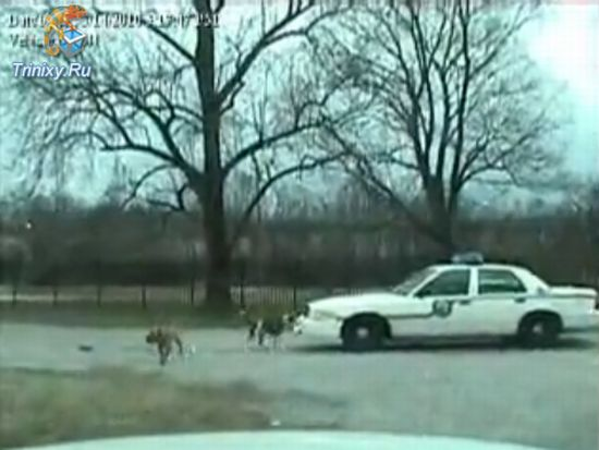 Dogs Attack Police Car