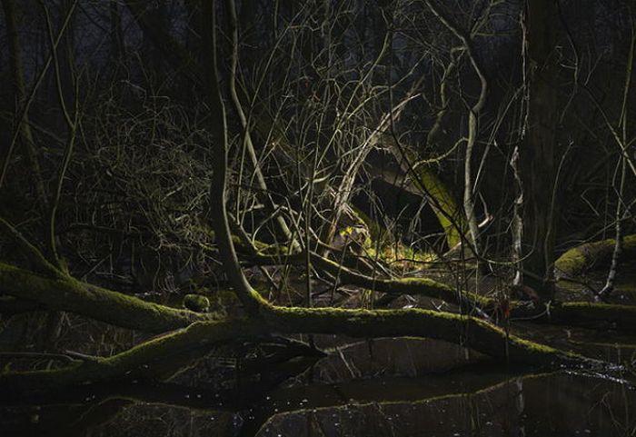 Still Landscapes (36 pics)