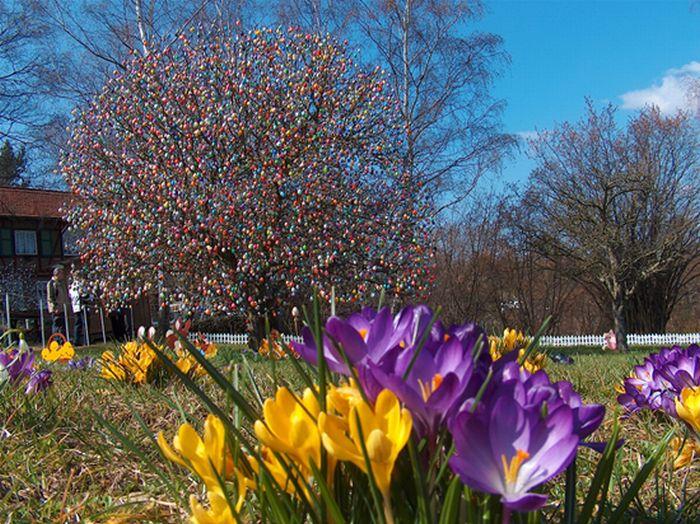 Easter Tree (7 pics)