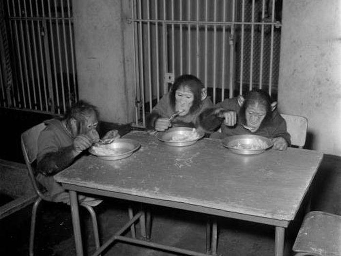 Classic Zoo Pictures (16 pics)