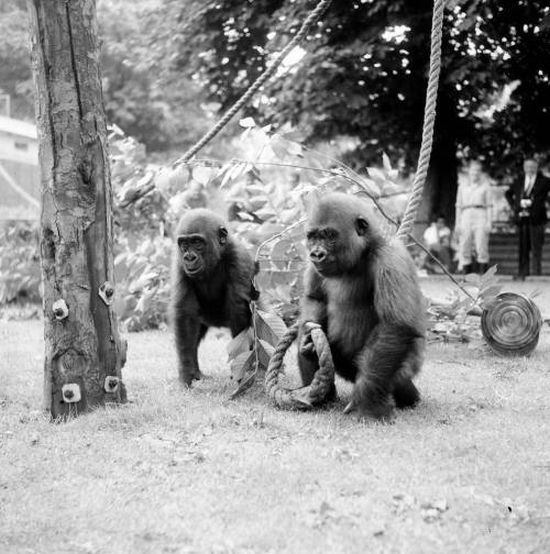 Classic Zoo Pictures (16 pics)