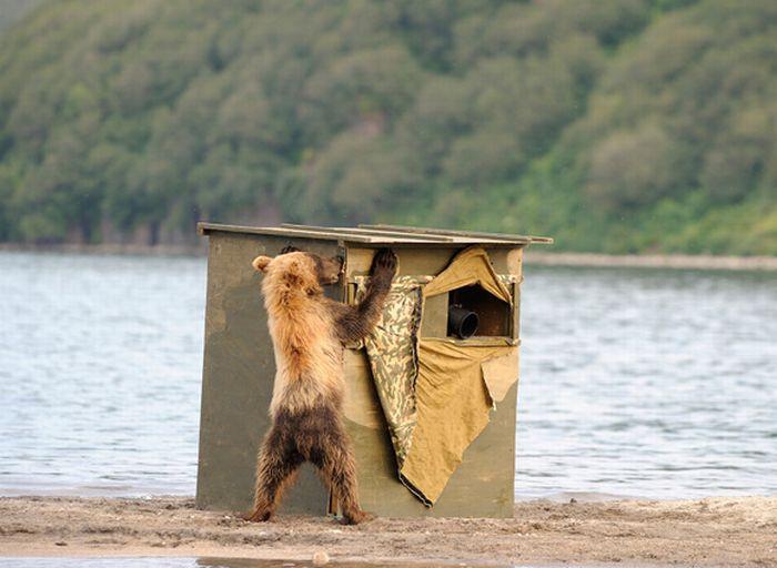 How to Make a Perfect Animal Photo (14 pics)