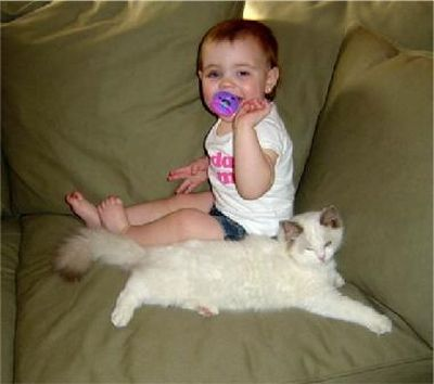 Babies and Kitties (23 pics)