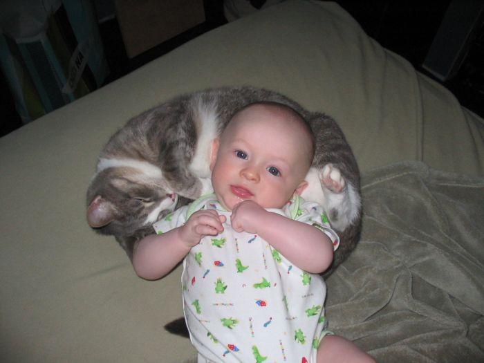 Babies and Kitties (23 pics)