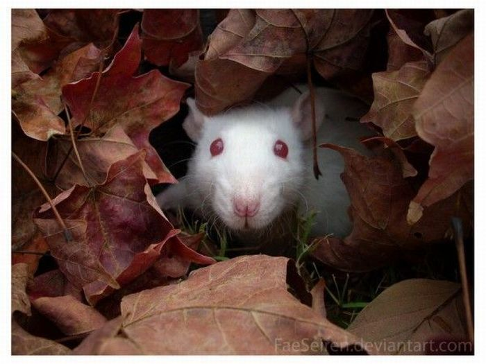 The Cutest Albino Animals (15 pics)