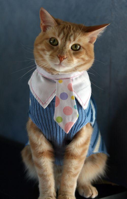 Office Cat (4 pics)