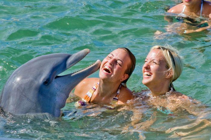 Dolphins (25pics)
