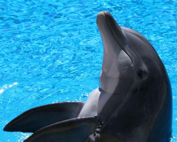 Dolphins (25 pics)