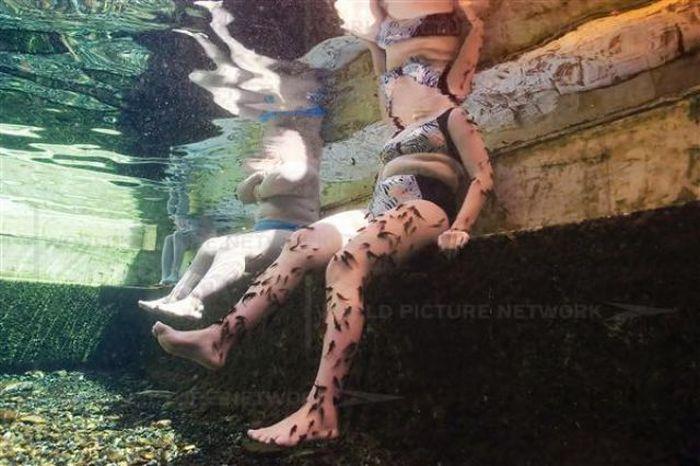 Fish Spa (12 pics)