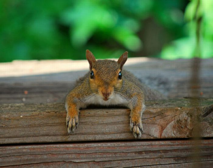 Squirrels are Lazy (17 pics)