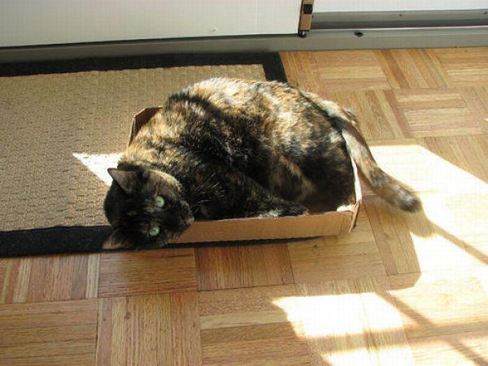 Fat Cats (62 pics)
