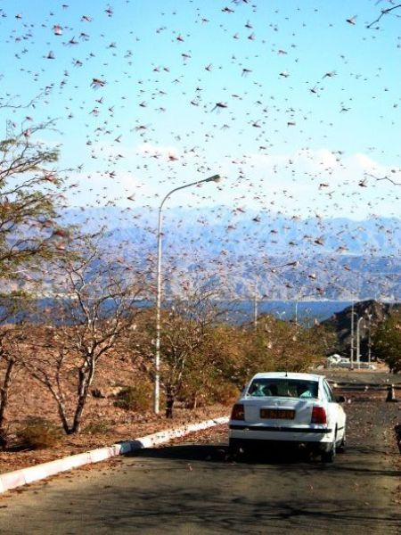 When Insects Attack (27 pics)