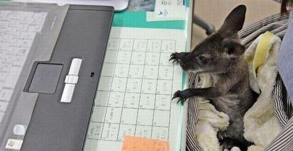 Animals on Computers (15 pics)