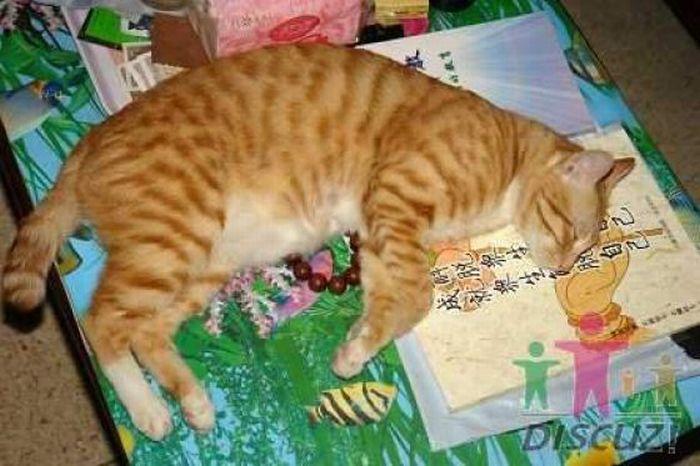 Reading Cat (14 pics)