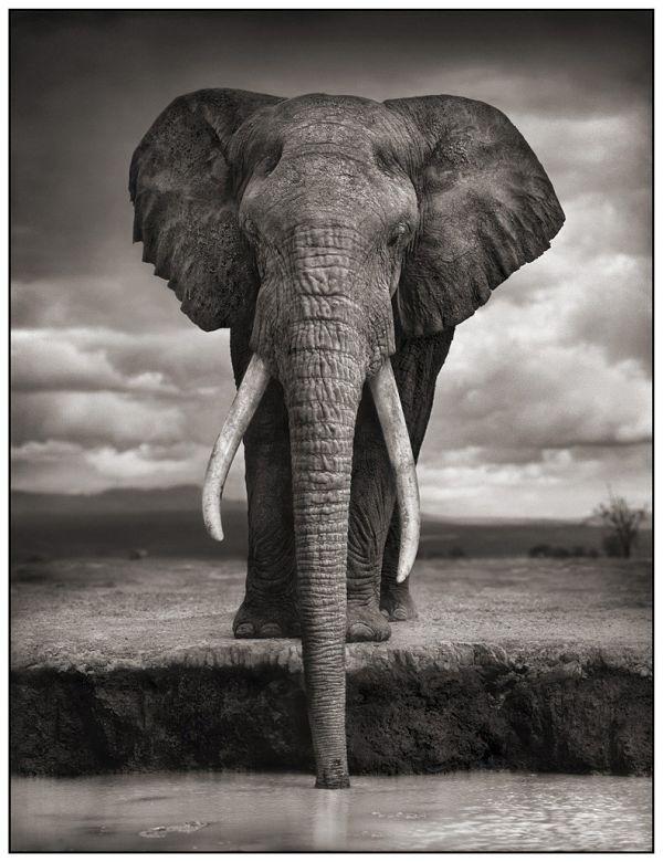 Africa (25 pics)