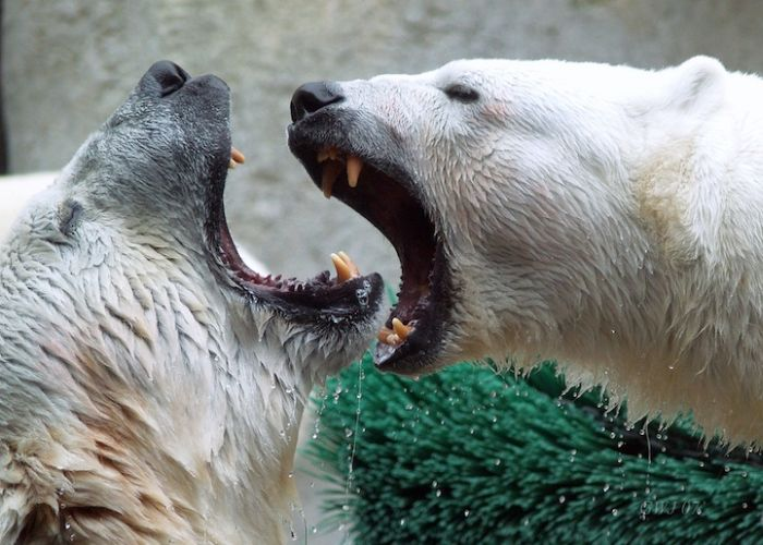 Zoo Animals Captured at the Right Moment (30 pics)