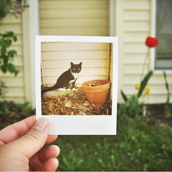 Fun with Polaroids (19 pics)